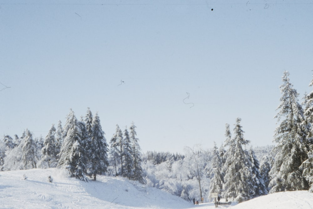 white snowy ground with trees during daytime