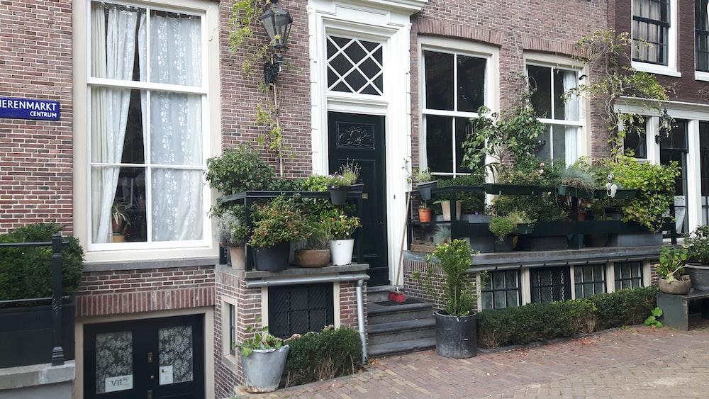 green plants on house front