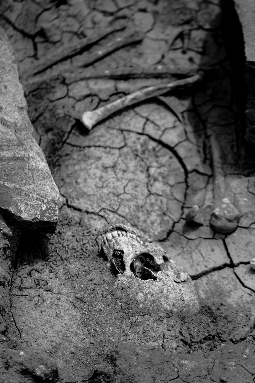 human skeleton photograph