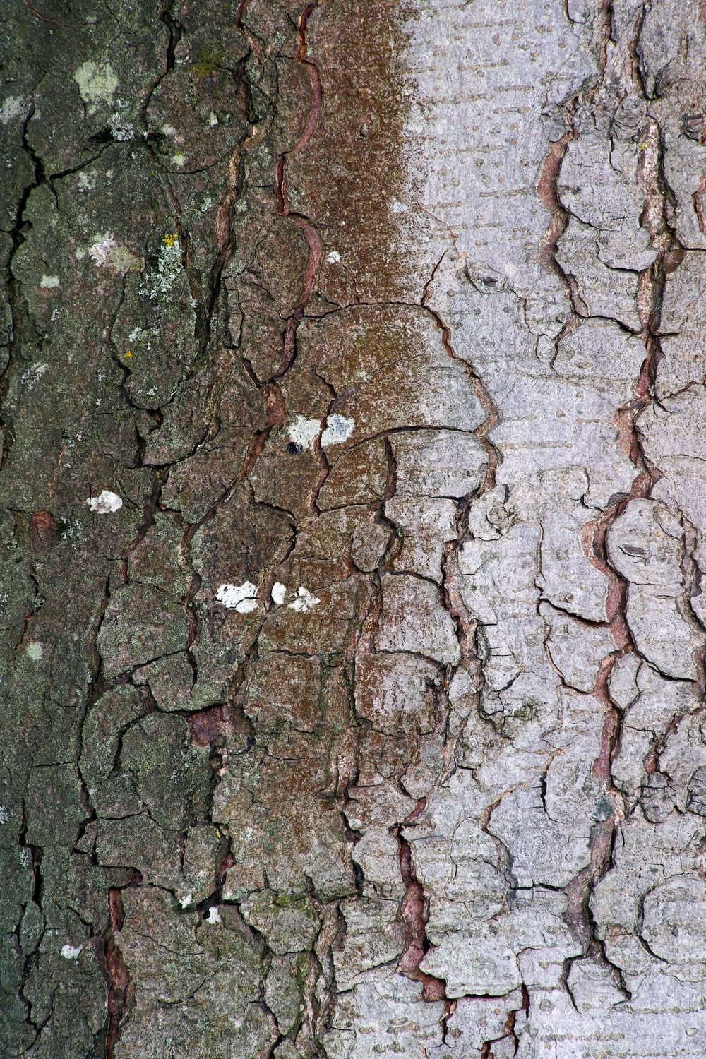 brown and gray tree trunk surface