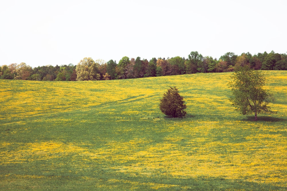 tree on grass field during day