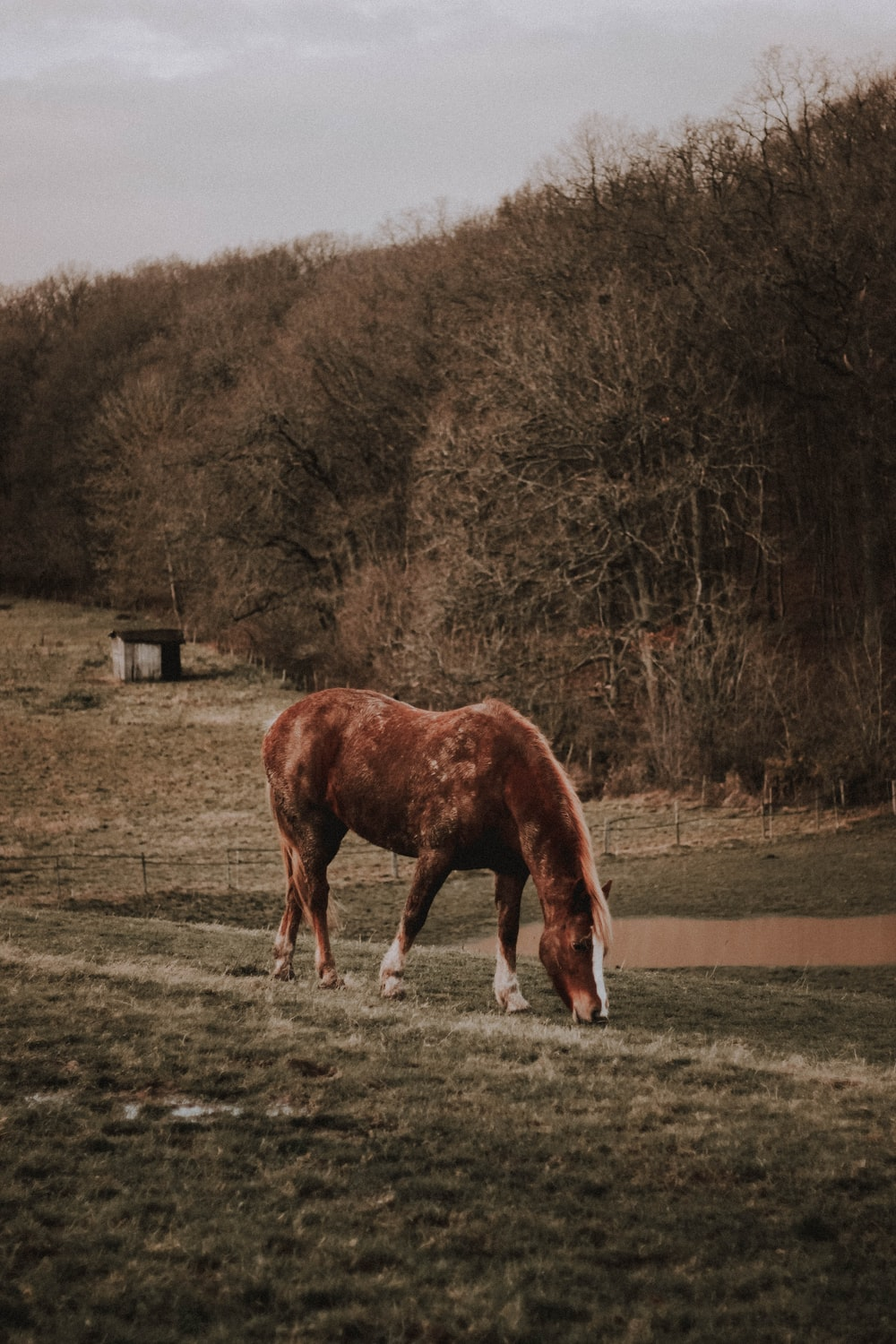 horse eating grass near trees during day
