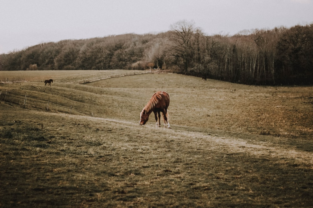 brown horse eating grass at the field during day