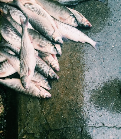 bunch of fish lot