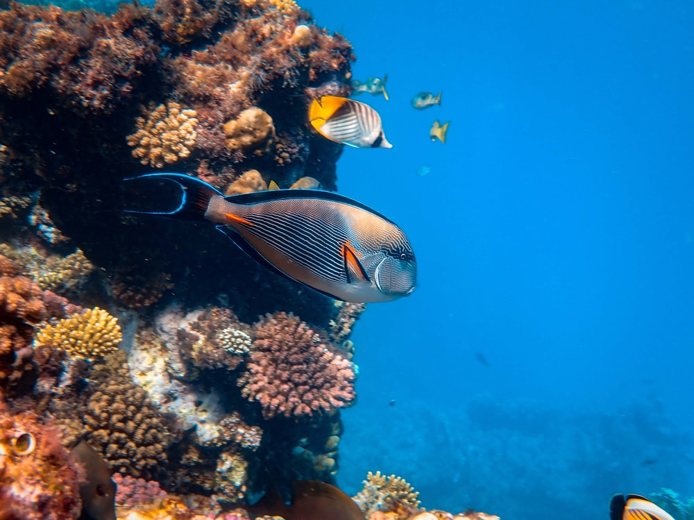 fishes underwater near corals