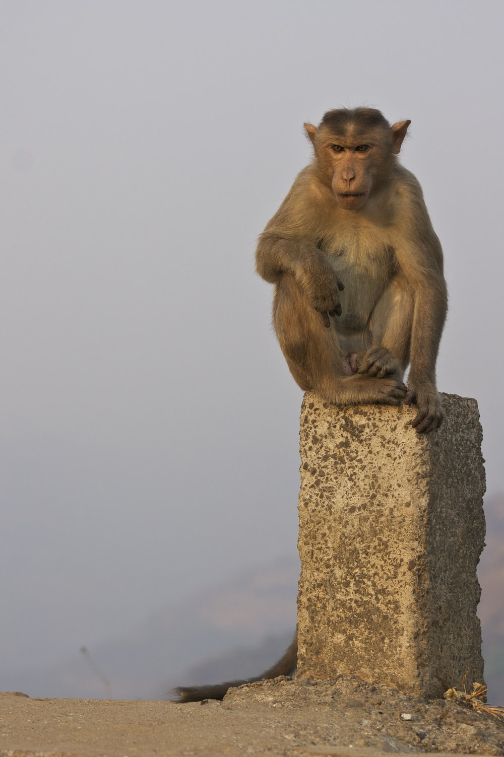 monkey sitting on stone