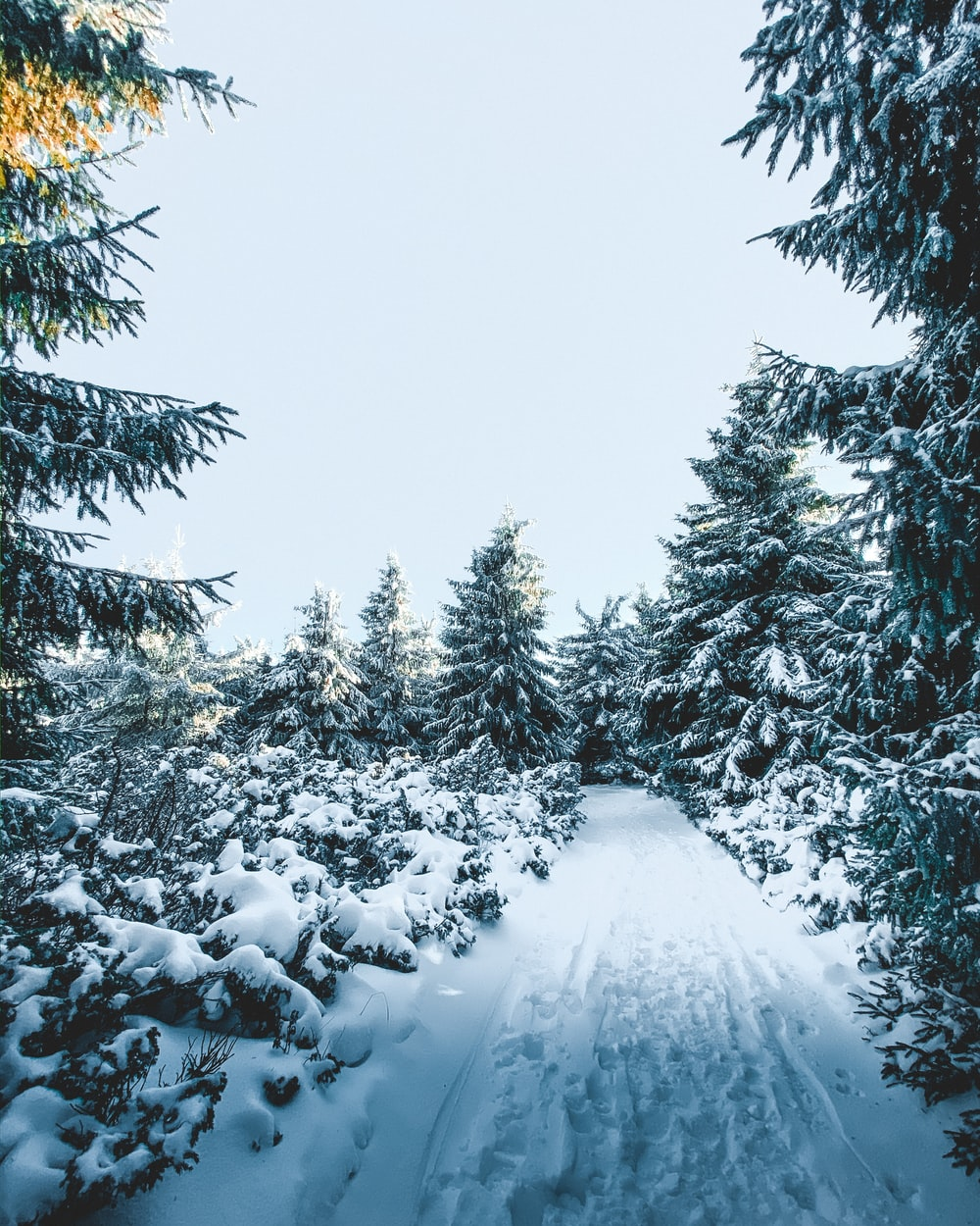 photography of snow-covered field and pine trees during daytime