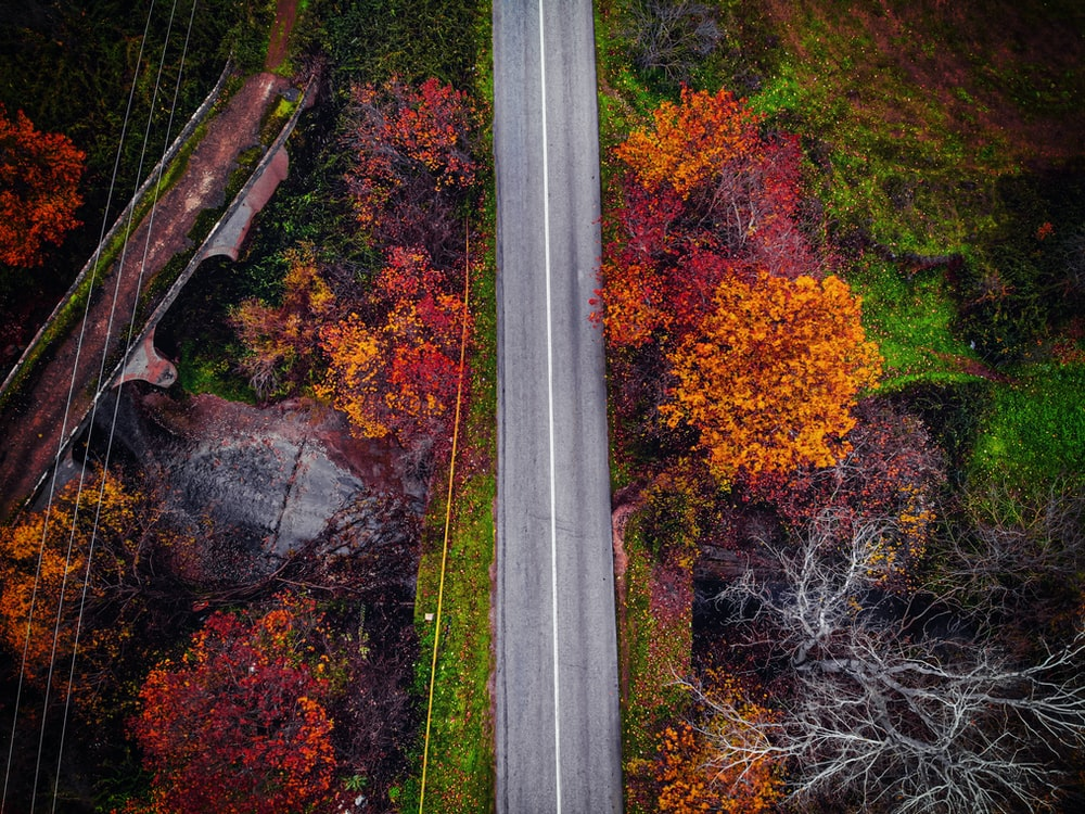 aerial photography or road and trees during daytime