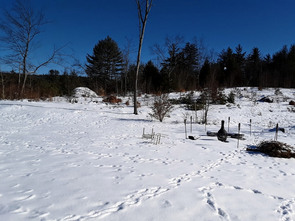 photography of snow-covered field during daytime