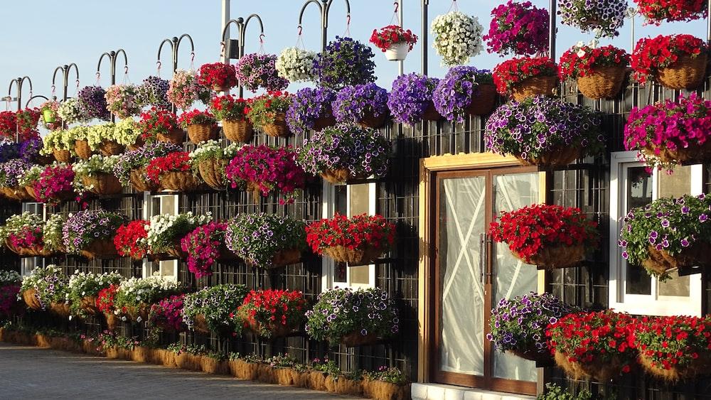 flower arrangements on wall
