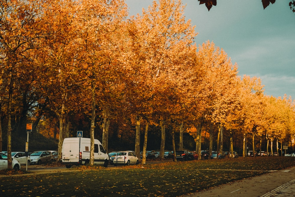 parked vehicles under trees