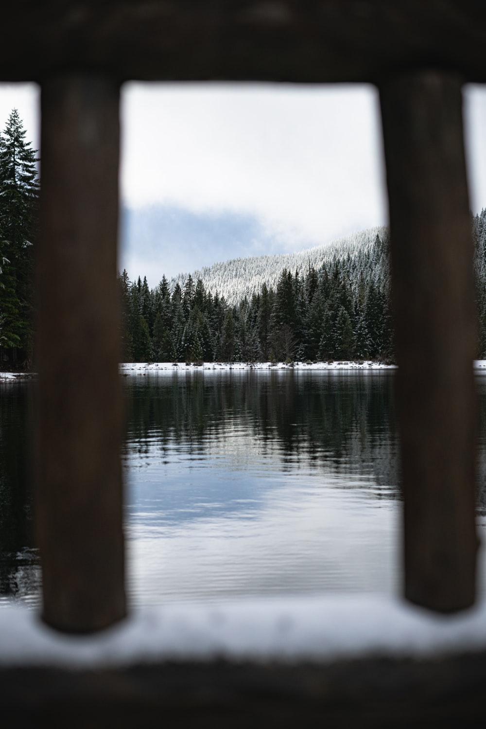 body of water and forest during day
