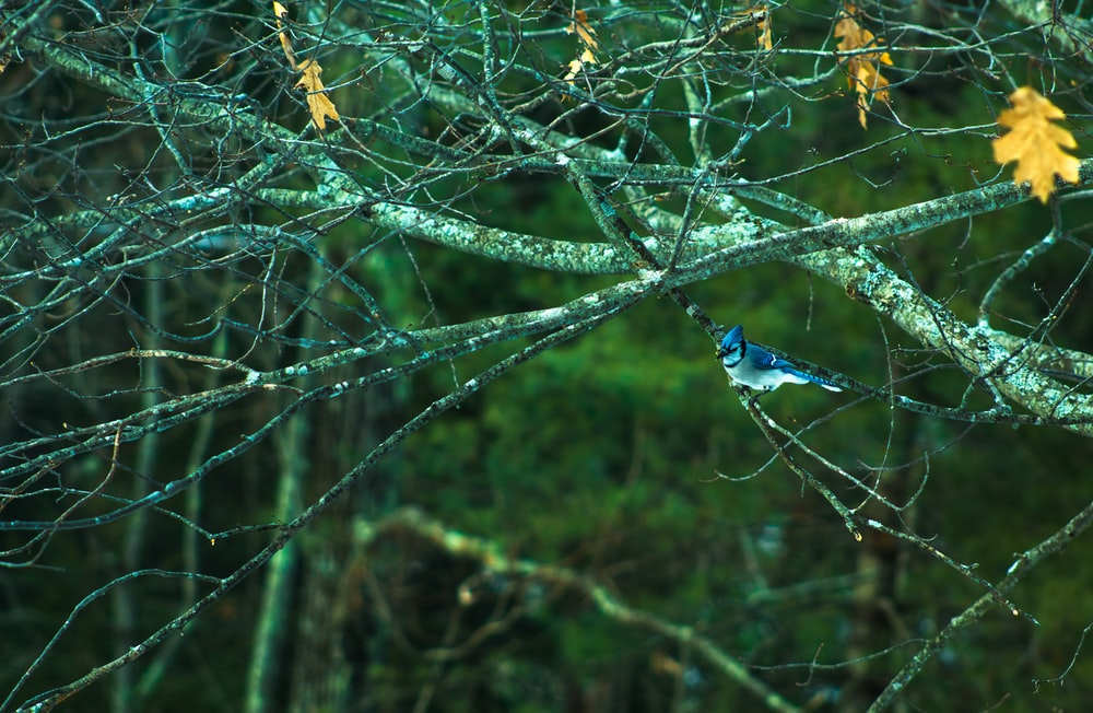 selective focus photography of gray and blue bird on tree branch