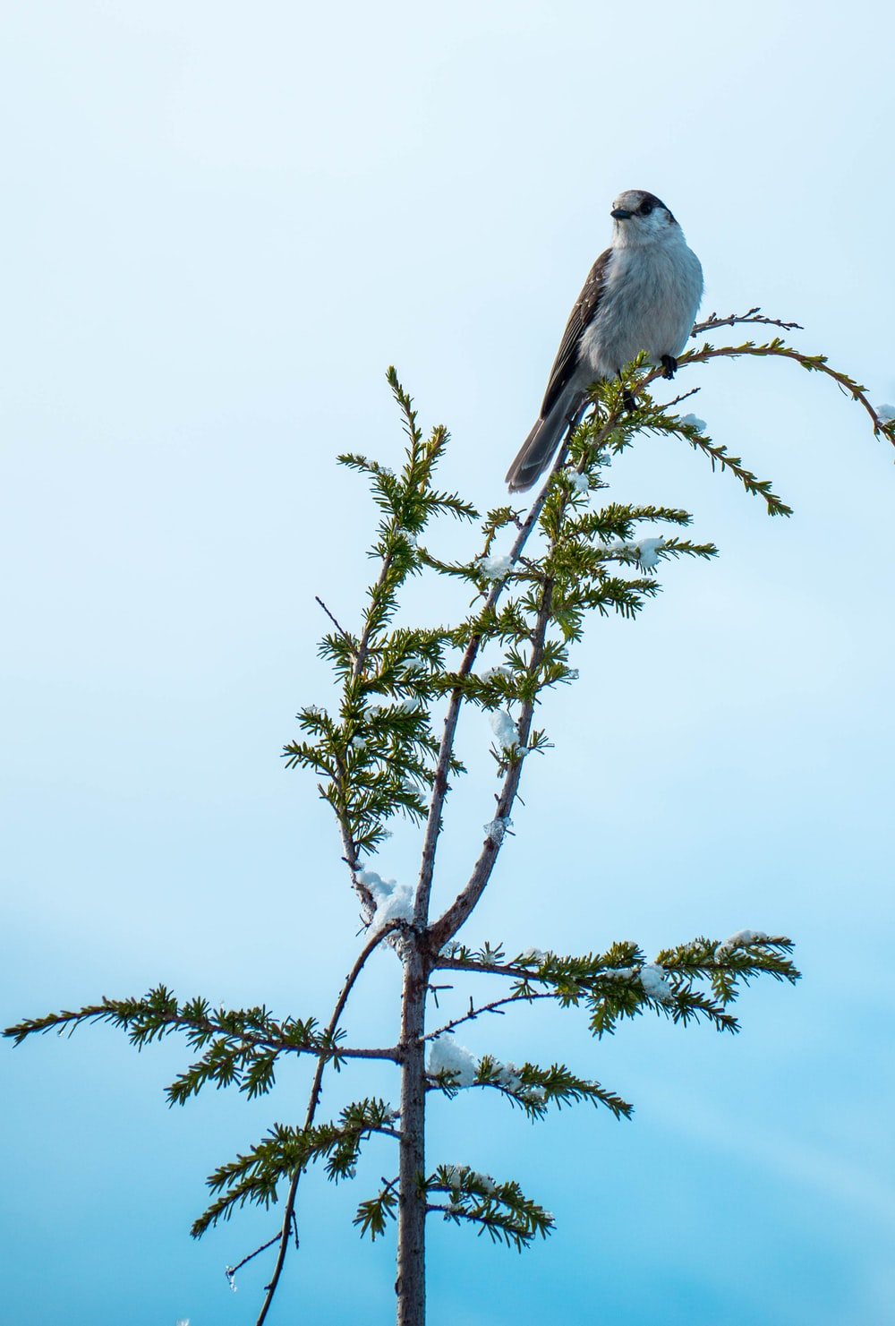 selective focus photography of gray bird on tree