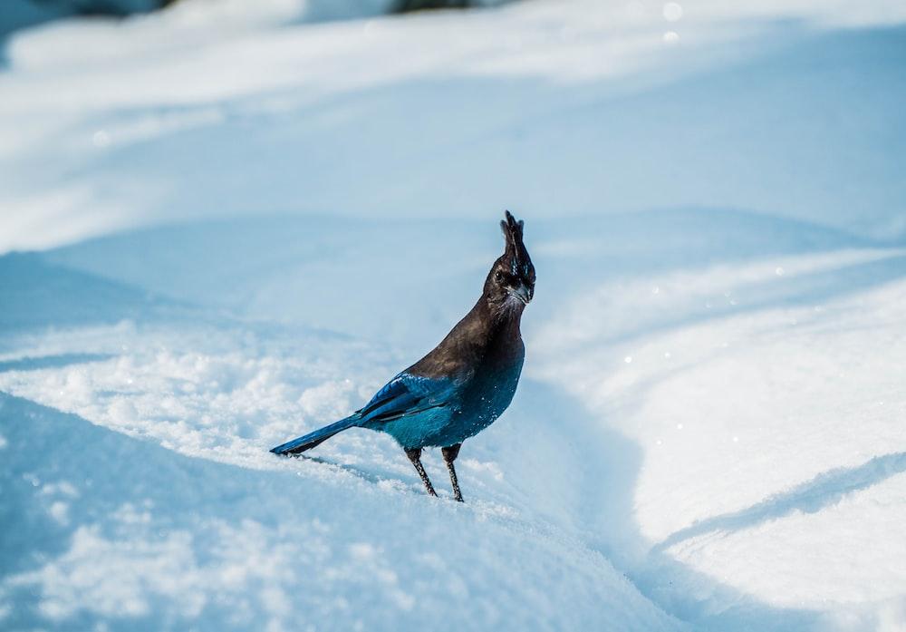 selective focus photography of bird on blue and black bird