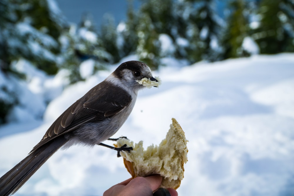 macro photography of brown and white small-beaked bird