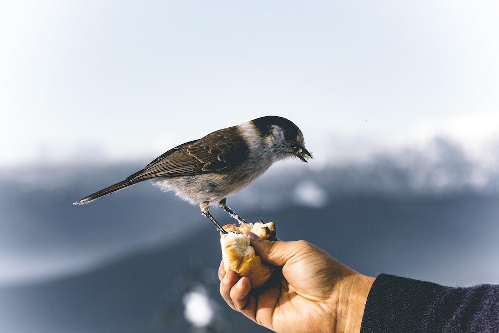bird perching on bread