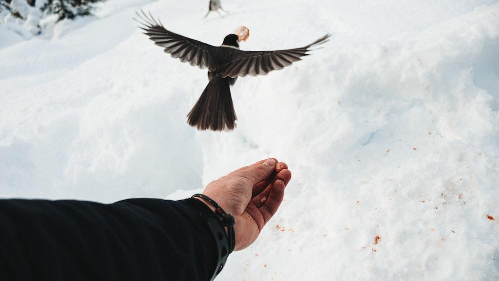 flying bird near human