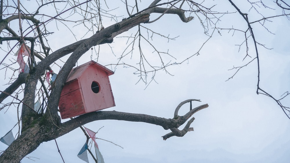 pink birdhouse on tree