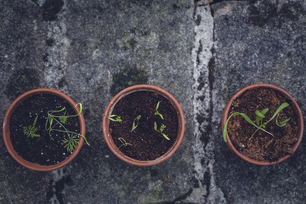 three plants in pot