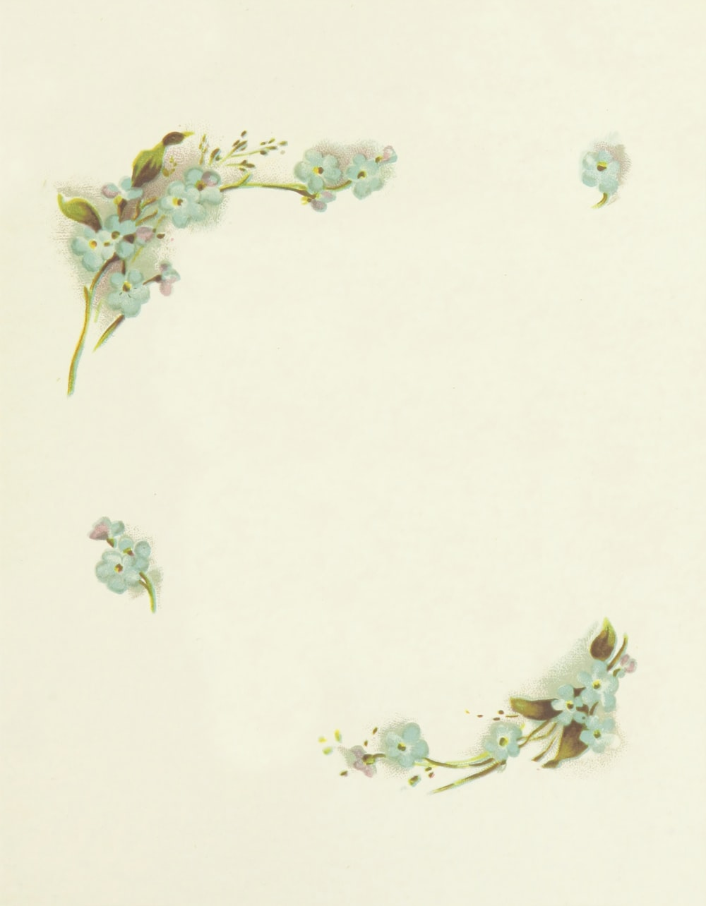 white flowers illustration