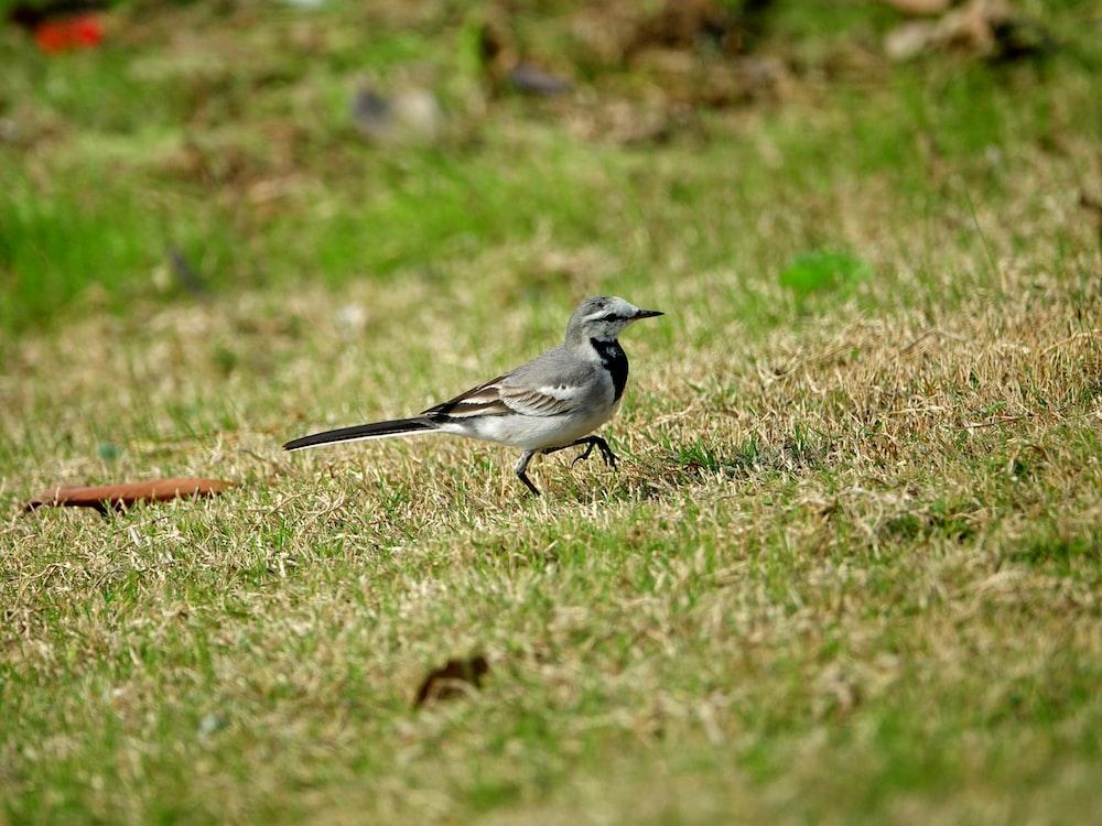 small gray bird on grass