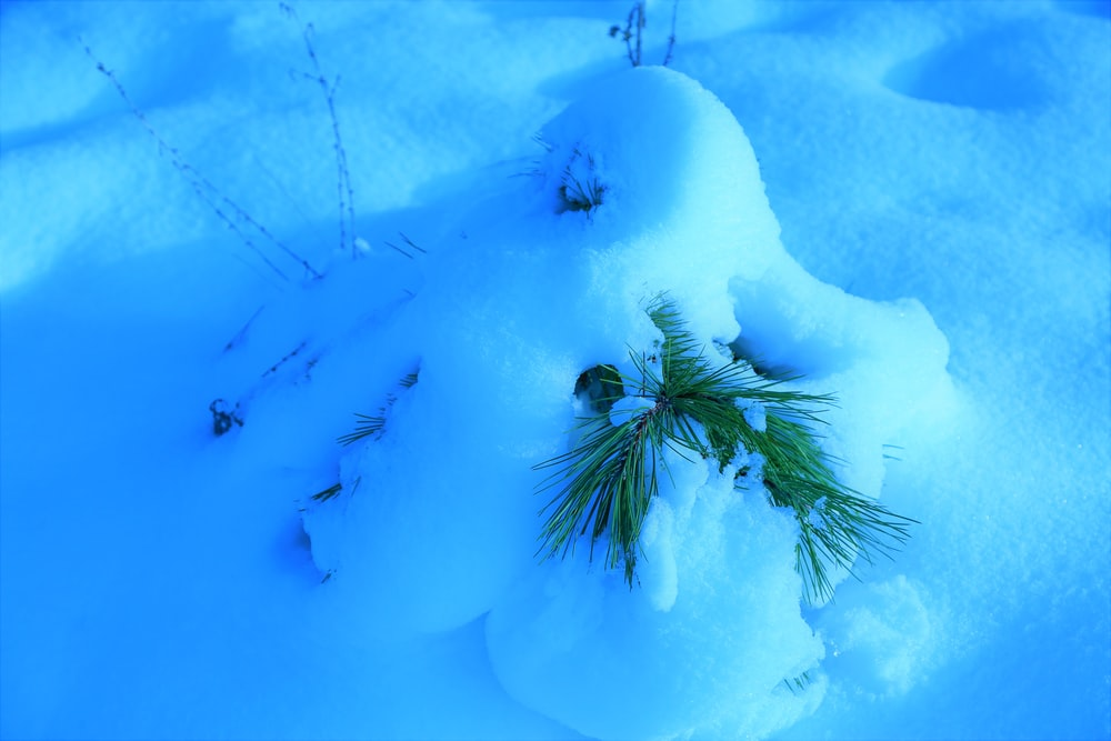 green tree covered with snow