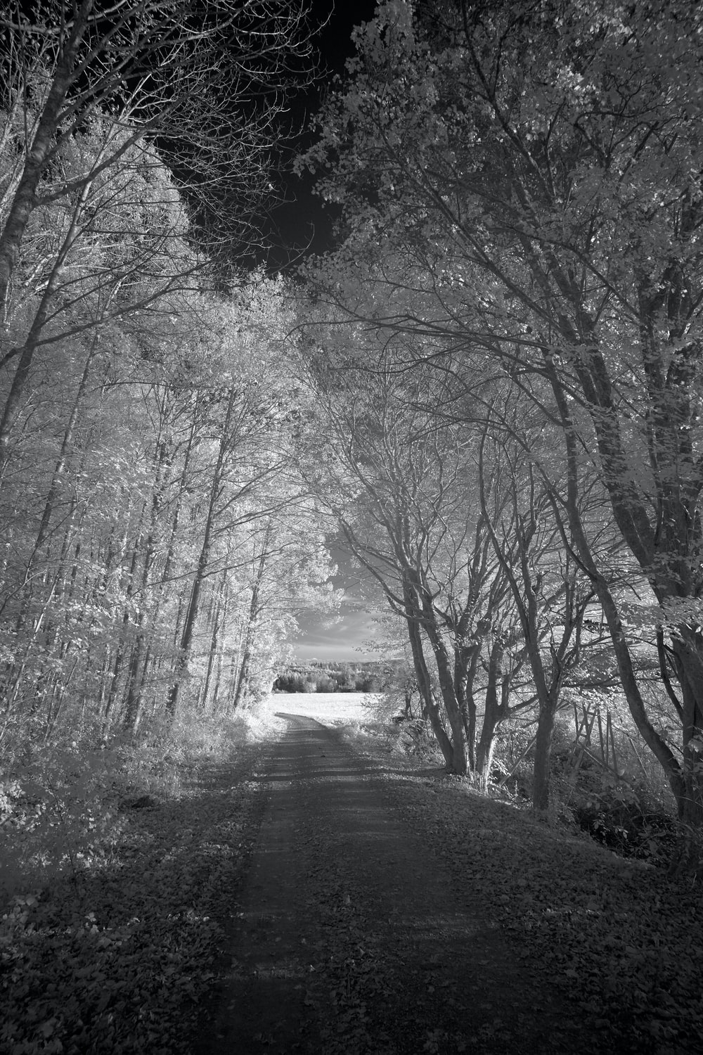 dirt road and trees during day