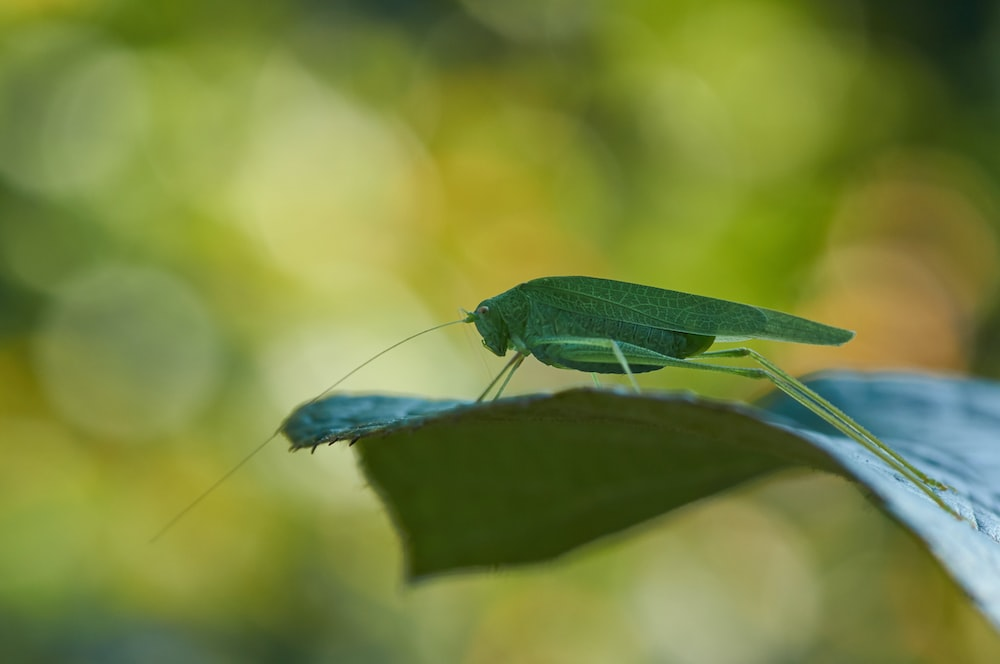 green insect on leaf