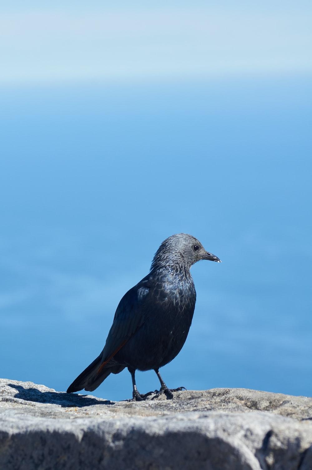 black bird on stone during daytime