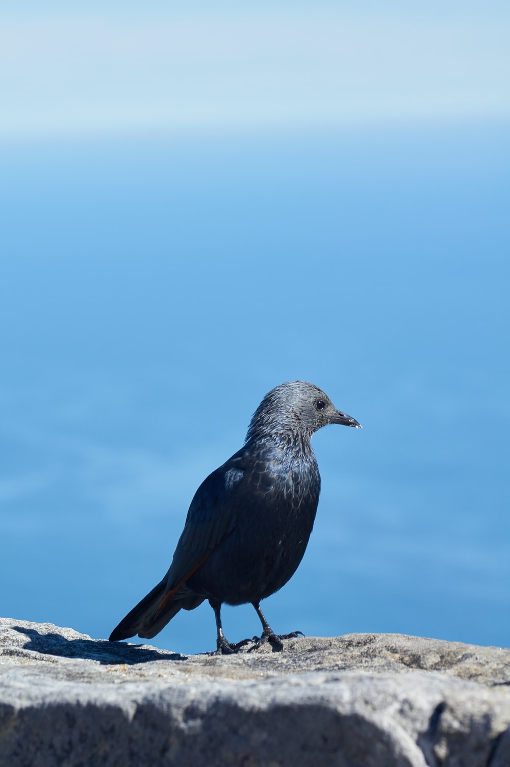 black bird on stone during daytime