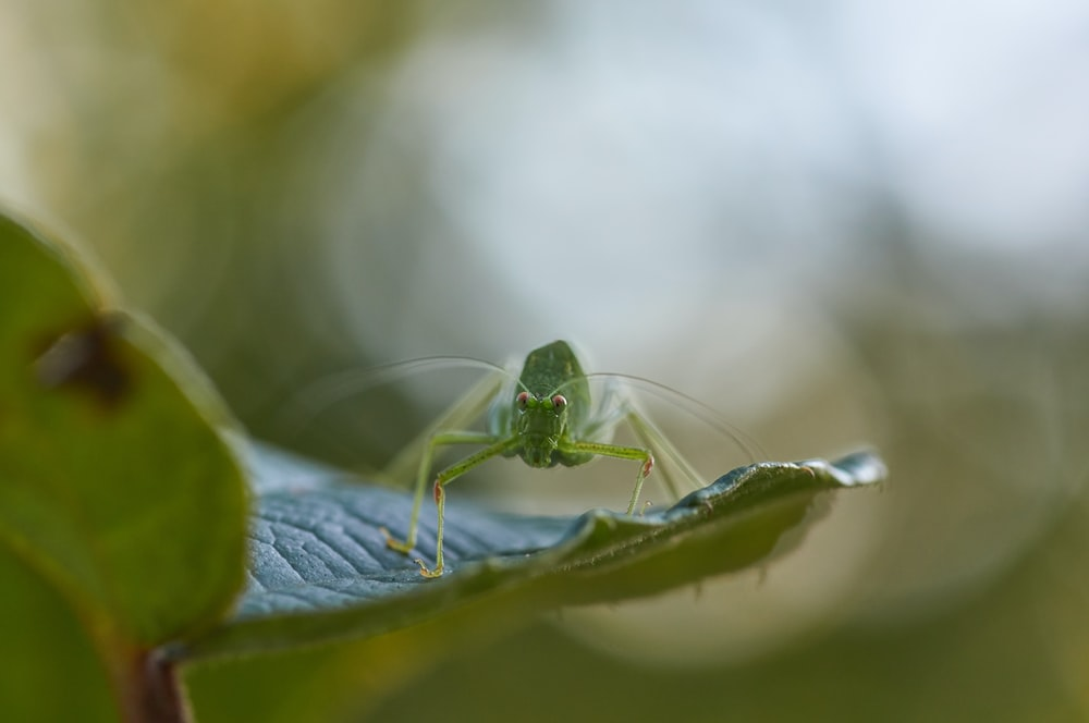 green mantis on green leaf plant