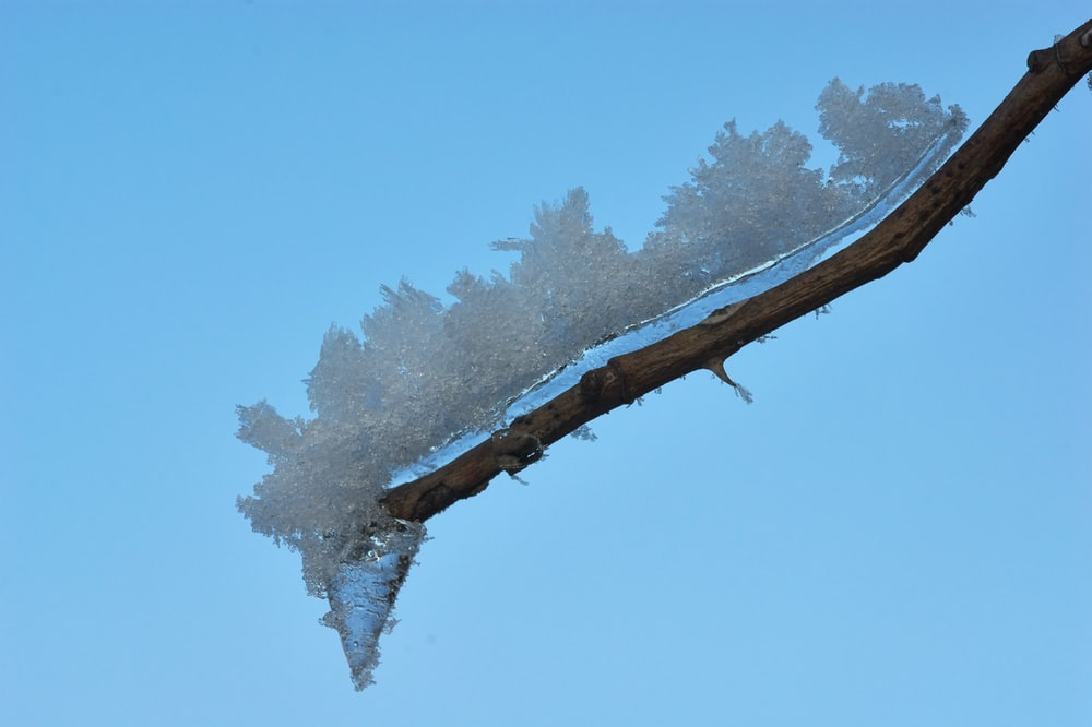 white ice on wood branch