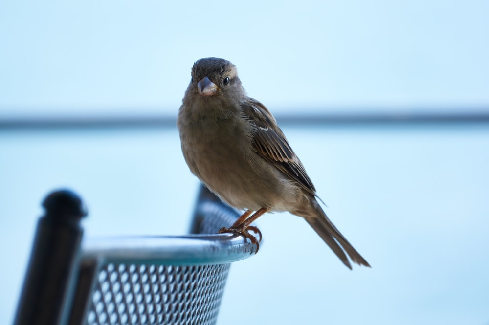 brown and gray bird on metal bench
