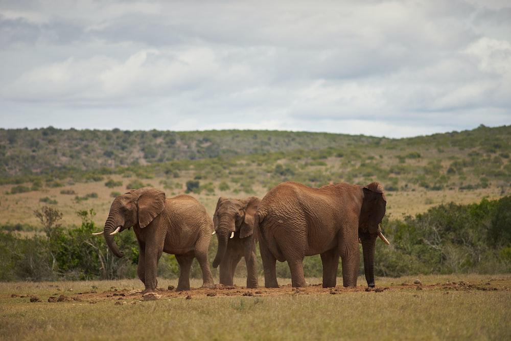 grey elephant photograph