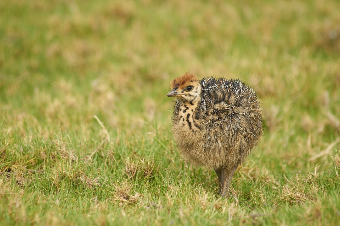 Kiwi Bird Pictures Download Free Images On Unsplash