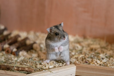 This Hamster Is Happy Because It's Not Doing So Well Anymore...