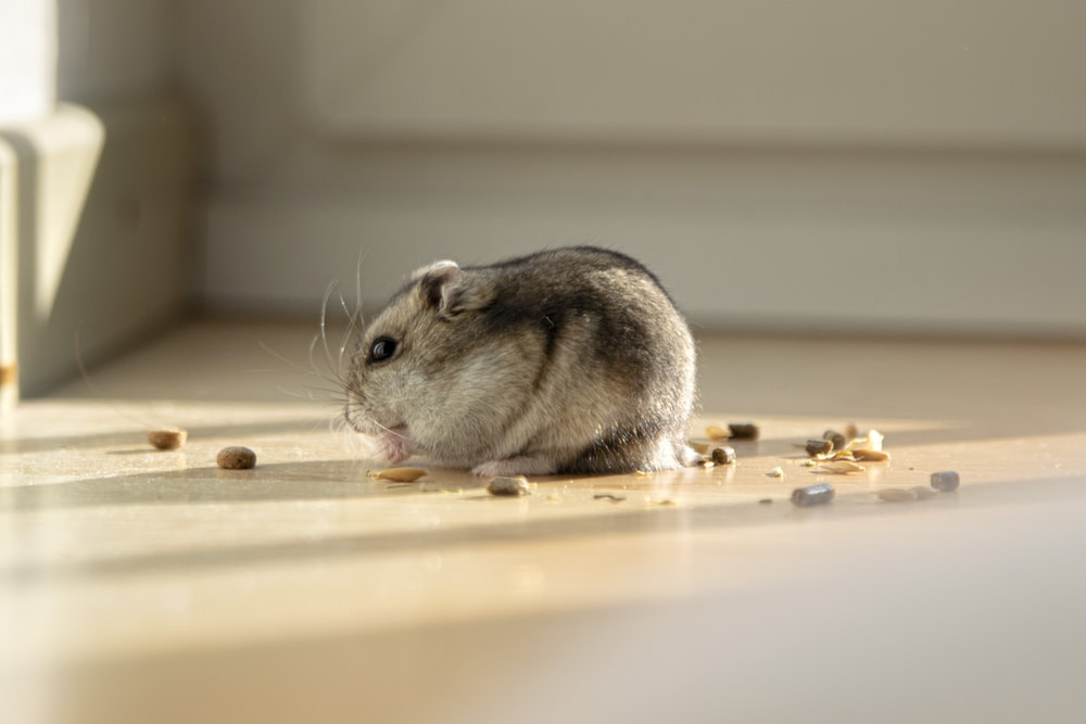 selective focus photography of rodent on white floor