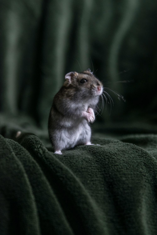 brown rat on green textile