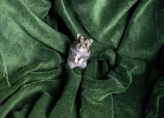 hamster on green textile