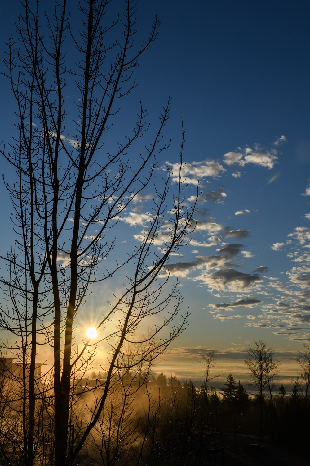 silhouette photography of trees during dawn