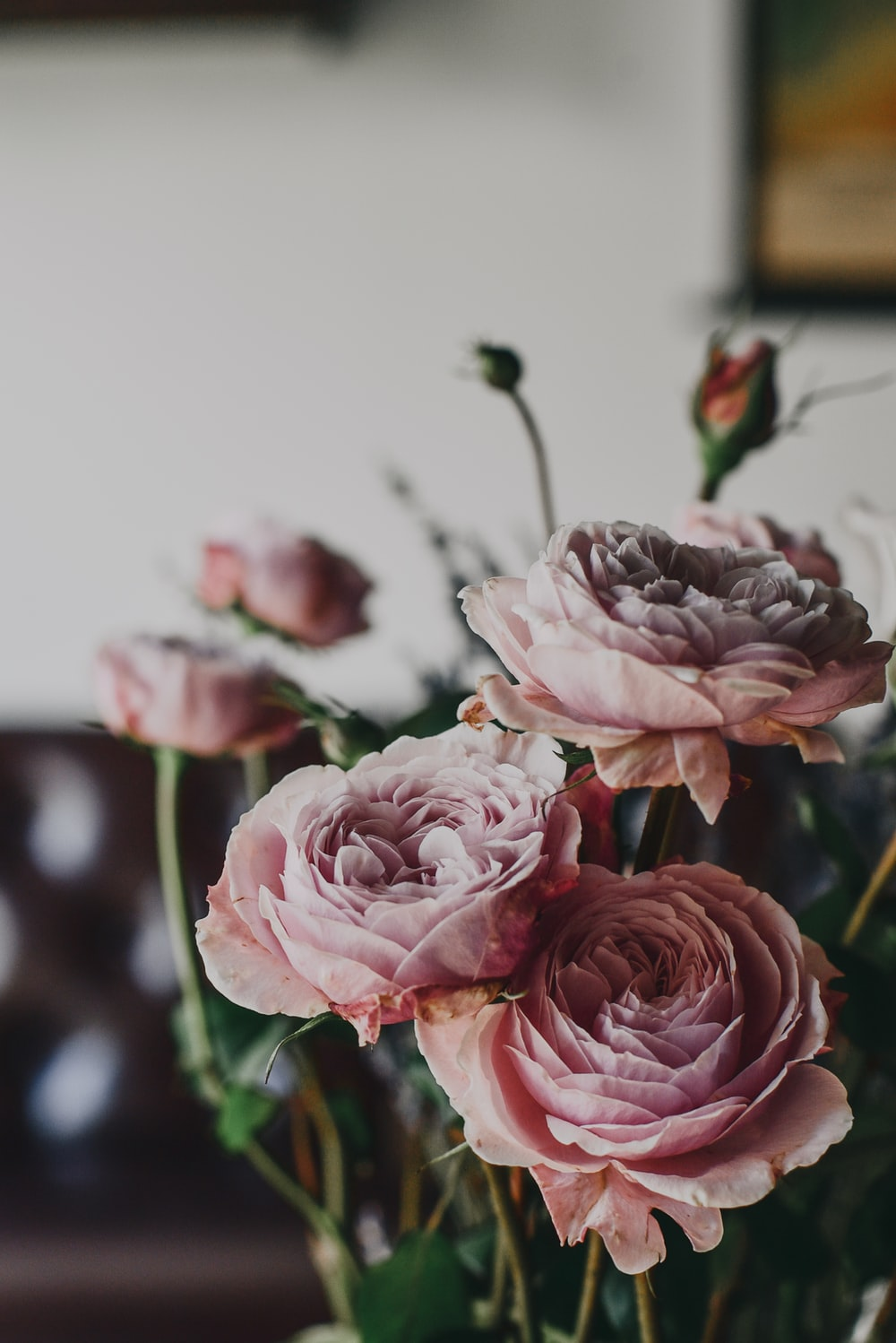 pink rose flowers with green leaves