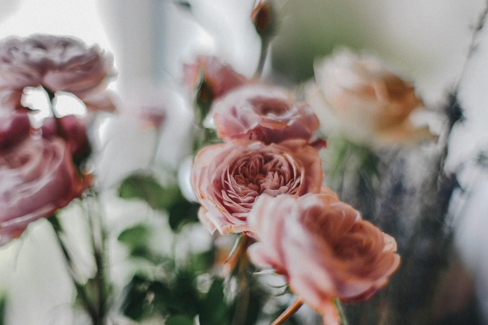 brown rose flowers