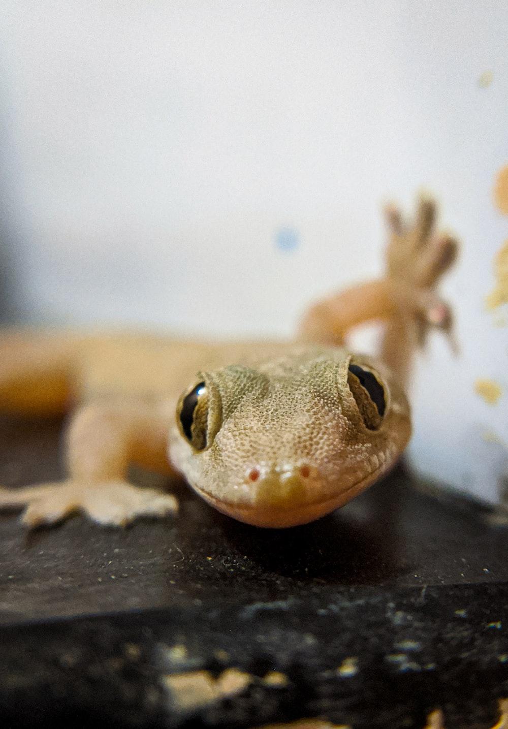 macro photography of yellow gecko