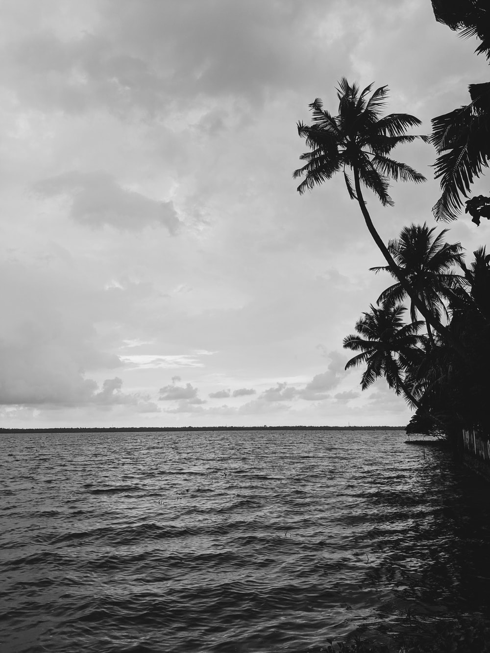grayscale photography of trees near body of water