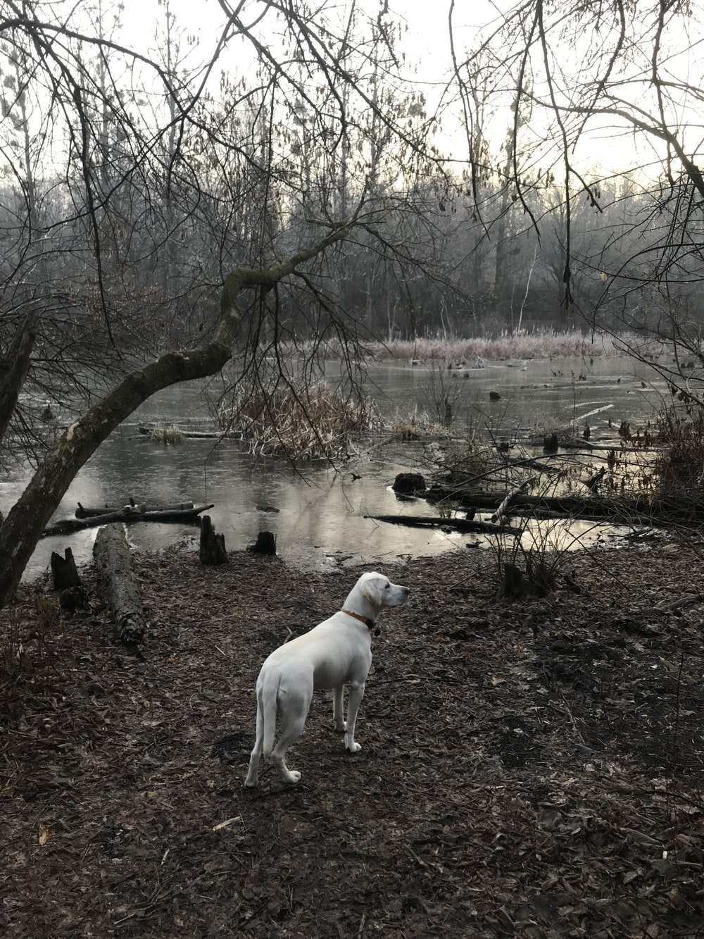 white dog near lake