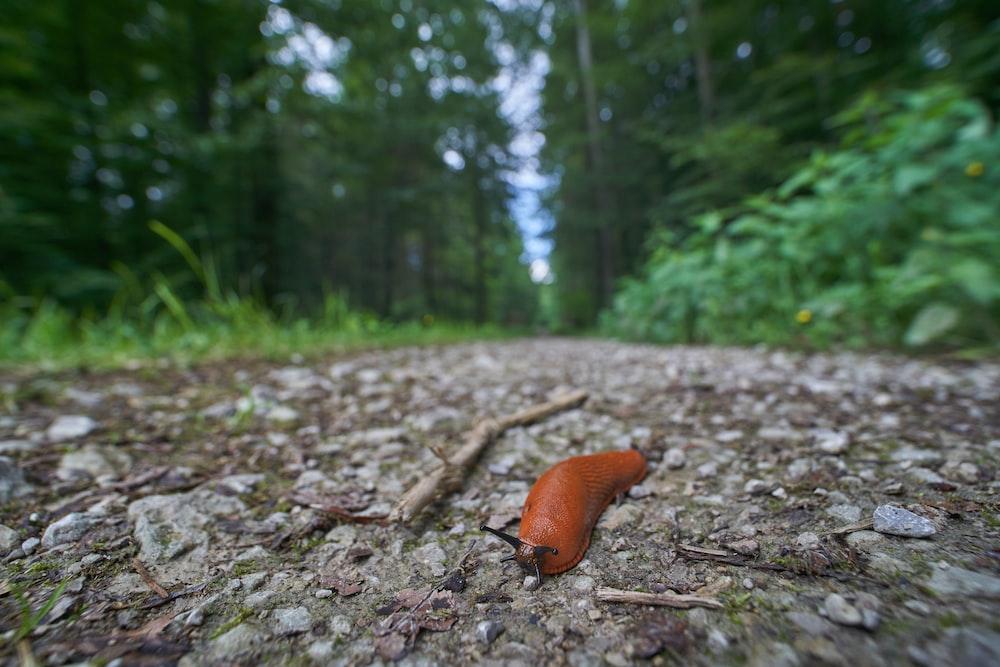 orange lug on ground