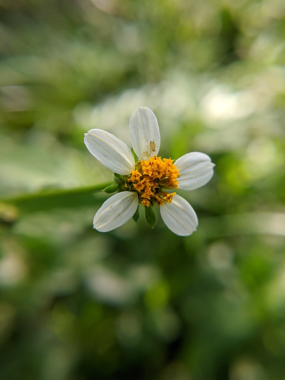selective focus photography of white 5-petaled flower