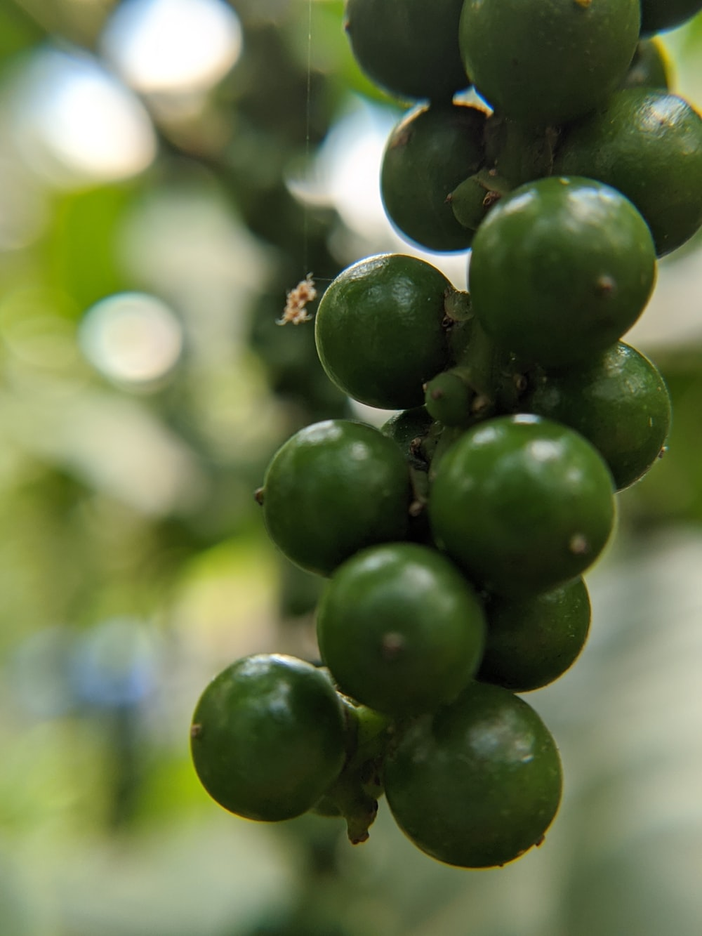 selective focus photography of green fruits