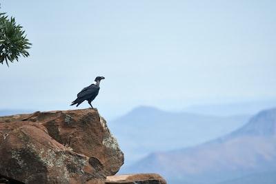 black bird on cliff during daytime